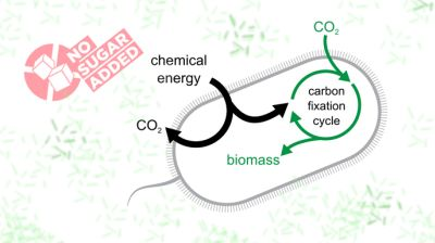 Such bacteria may, in the future, contribute to new, carbon-efficient technologies