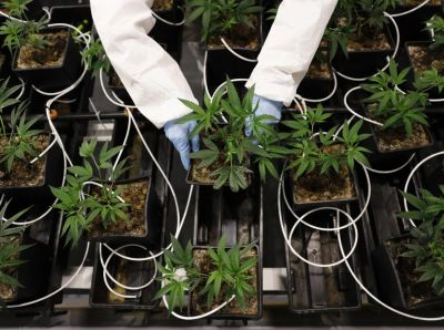 New tech could make life a lot easier for other local growers–and the people around them