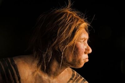 this reconstruction of a Neanderthal female was the first made using ancient DNA evidence