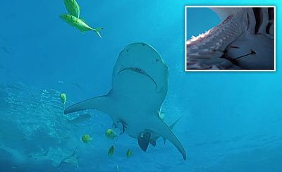 TERRIFYING footage captured the moment a man experienced being devoured by a ravenous shark.